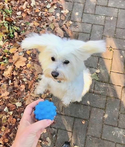 cane volante con pallina a ultrasuoni