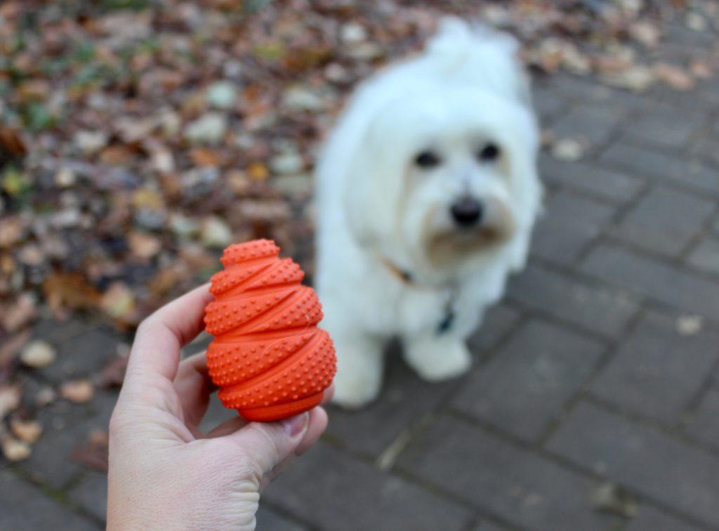 Giochi per cani che stimolano l'attivazione mentale